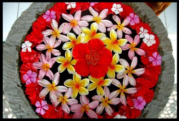 Bali Flower Offerings